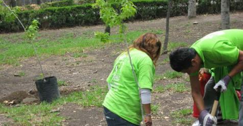 Lanzaron Un Proyecto Comunitario Para Plantar Rboles En