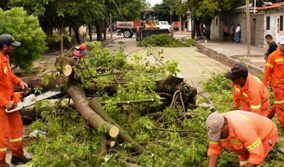 OPERATIVO. Se retiraron durante la mañana de ayer más de 50 árboles que interrumpían el paso