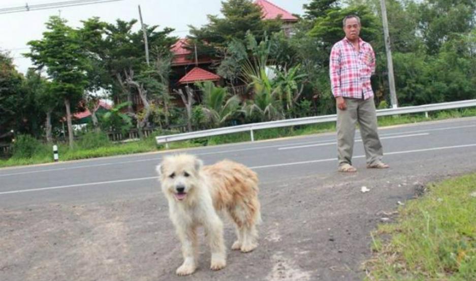 El perro, con su dueño de fondo.