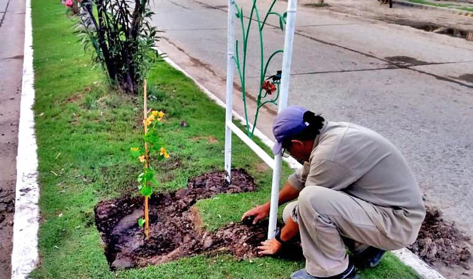 INICIATIVA. Con la colocación de árboles y especies florales, la avenida 25 de Mayo mejoró notablemente su fisonomía