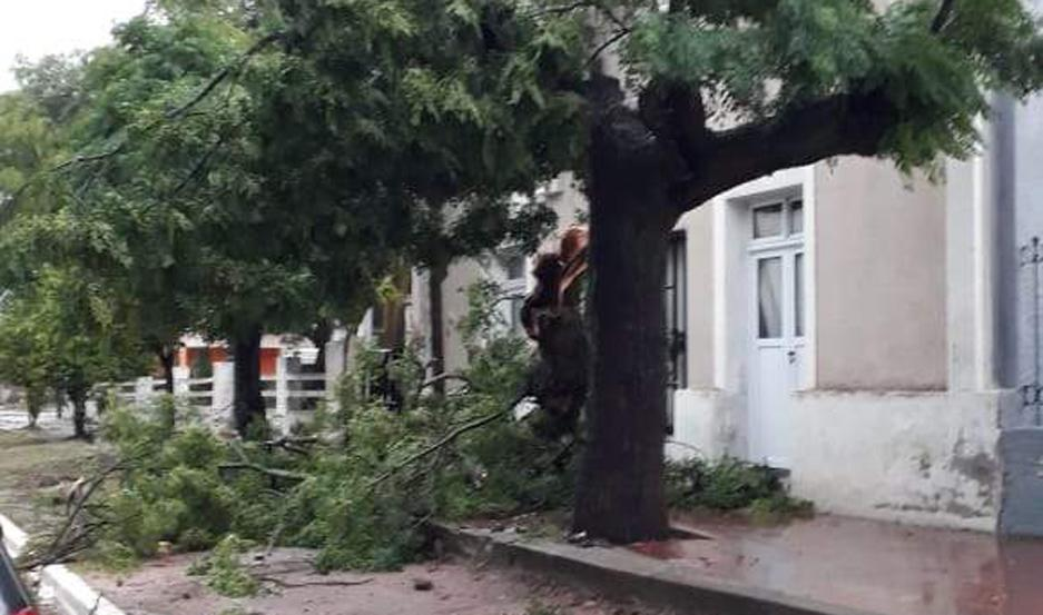 DESTROZOS. Numerosos árboles fueron derribados por el fuerte viento en el centro de la ciudad de Sumampa.