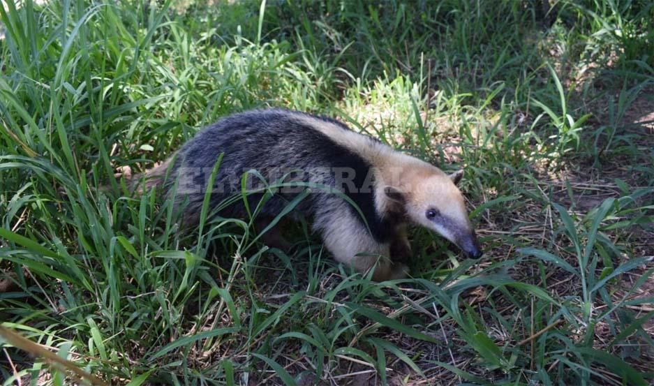 El animal fue curado por un veterinario y devuelto a su hábitat natural.