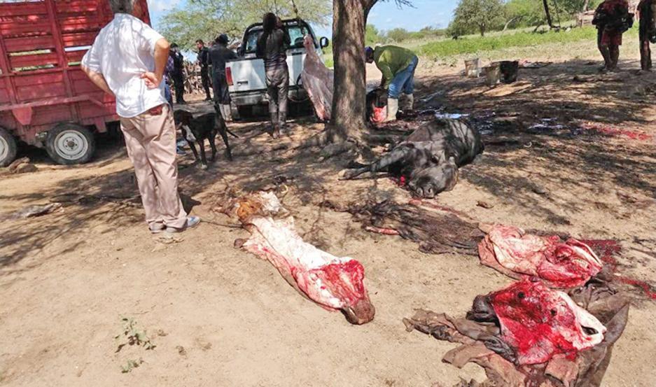 Se decomisaron 3 animales faenados clandestinamente y la interdicción de dos animales en pie hasta tanto se justifique su procedencia.