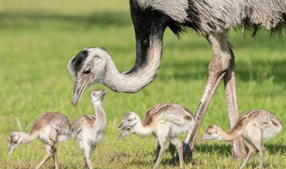 La escasa circulación de personas permitió que se observaran animales silvestres en su hábitat natural.
