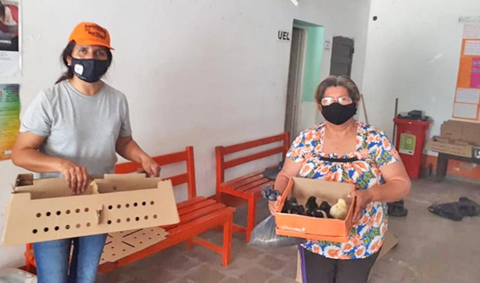 Numerosas familias recibieron pollitos para su cría.