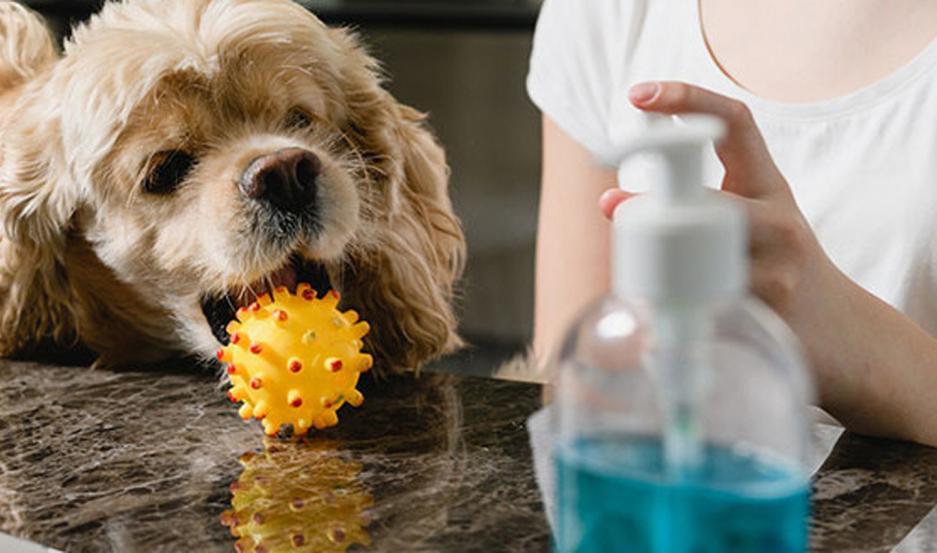 De unas 50 muestras realizadas a mascotas, alrededor de 5 dieron positivos.