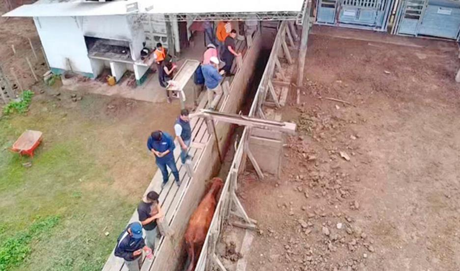 La Justicia santiagueña y la Policía lograron recuperar un tercio de la hacienda robada.