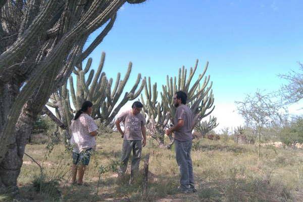 Pondr n algarrobos de viveros de bosques cultivados el for Viveros en santiago